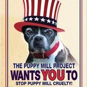Puppy Mill Awareness Day, September 30, 2012