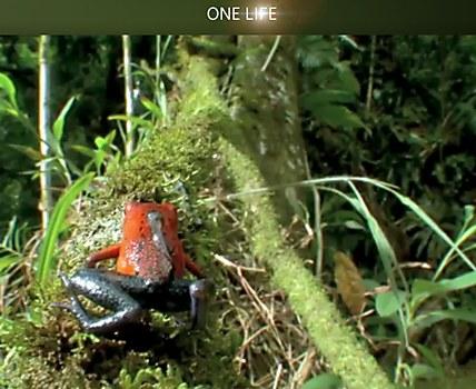 BBC One Life