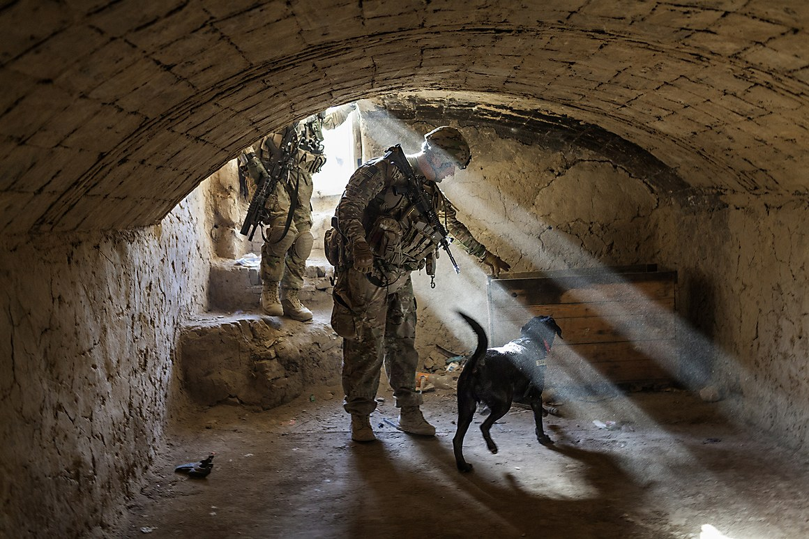 dogs of war photo essay An incredible story of a largely unseen but vital role that dogs play in our armed forces, the dogs of war is a must-read for animal-lovers everywhere military working dogs gained widespread attention after one participated in the seal team six mission that led to osama bin laden's death.